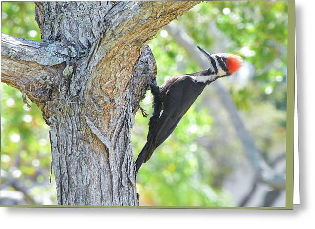 Surprised By Pileated Greeting Card