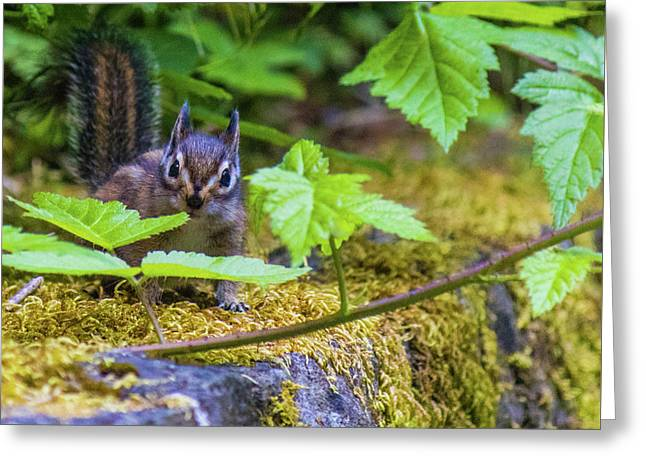 Greeting Card featuring the photograph Surprised Chipmunk by Jonny D