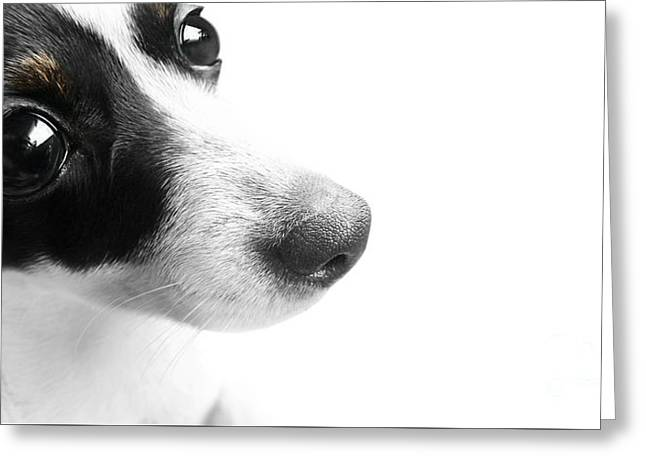 Surprised Dog Face Greeting Card by Jorgo Photography - Wall Art Gallery