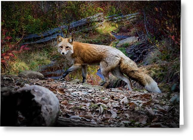 Surprising A Red Fox Greeting Card by John Haldane