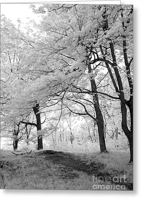 Greeting Card featuring the photograph Surreal Infrared Black White Nature Trees - Haunting Black White Trees Nature Infrared by Kathy Fornal