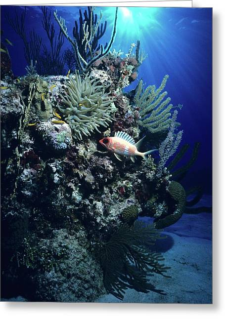 Surreal Reef Collage Greeting Card