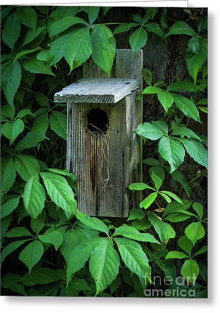 The Poison Surrounds Bird House Art Greeting Card