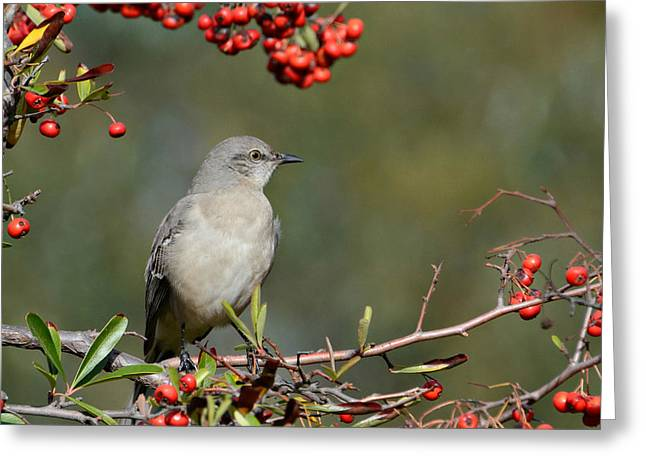 Surrounded By Berries 2 Greeting Card