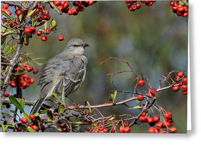 Surrounded By Berries Greeting Card by Fraida Gutovich