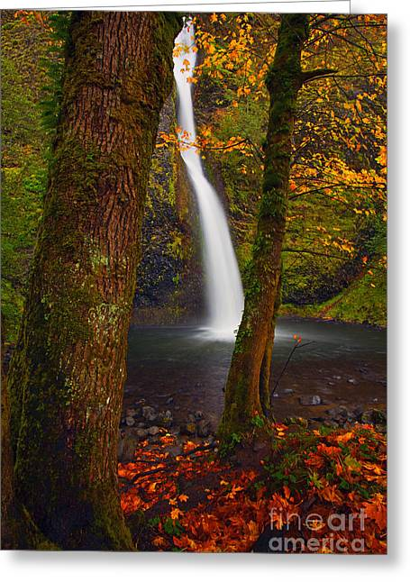 Surrounded By The Season Greeting Card by Mike  Dawson