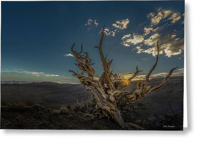 Greeting Card featuring the photograph Survivor by Tim Bryan