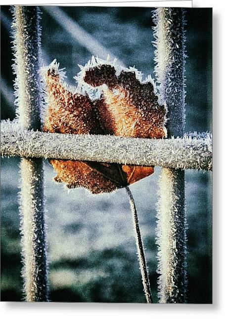Suspended Greeting Card by Karen Stahlros