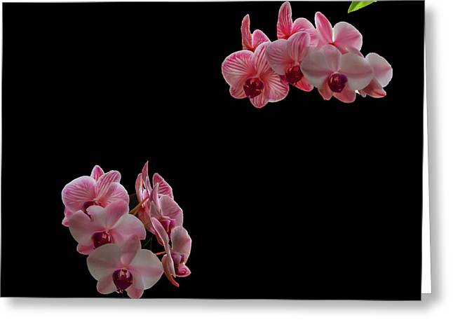 Suspended Orchids Greeting Card