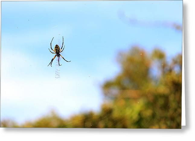 Suspended Spider Greeting Card