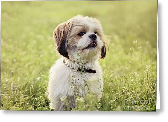 Sute Small Dog Greeting Card by Jelena Jovanovic