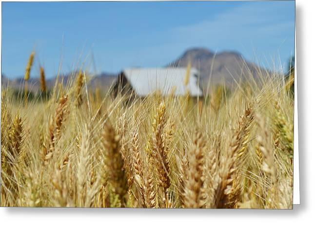 Sutter Buttes Wheat  Greeting Card