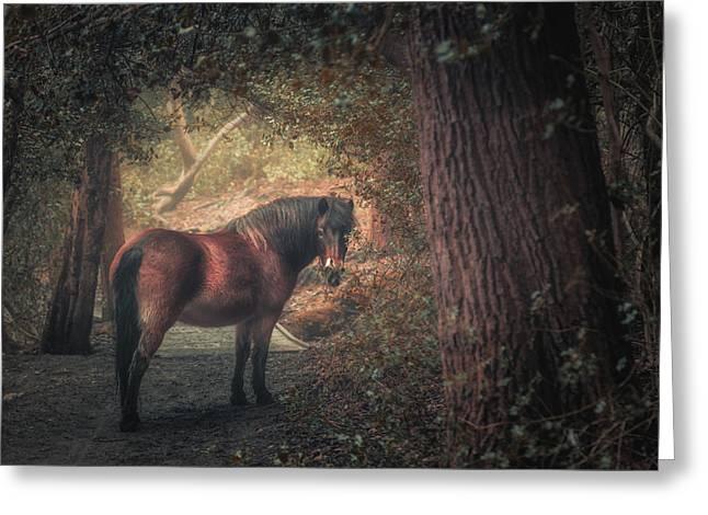 Sutton Pony Greeting Card