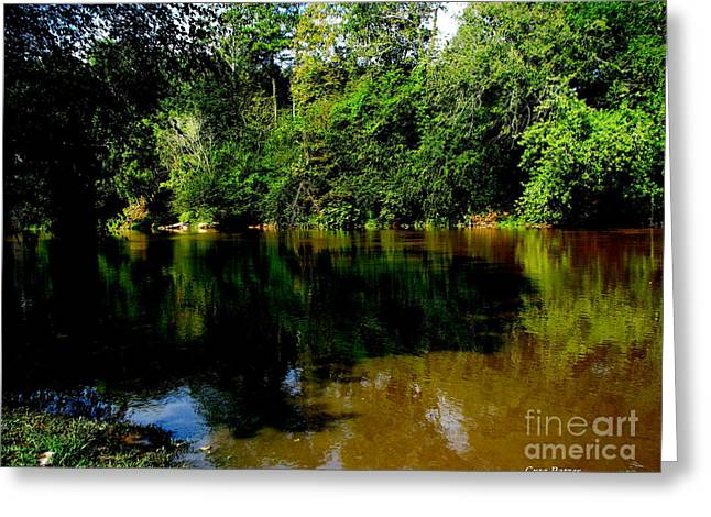 Suwannee River Greeting Card by Greg Patzer