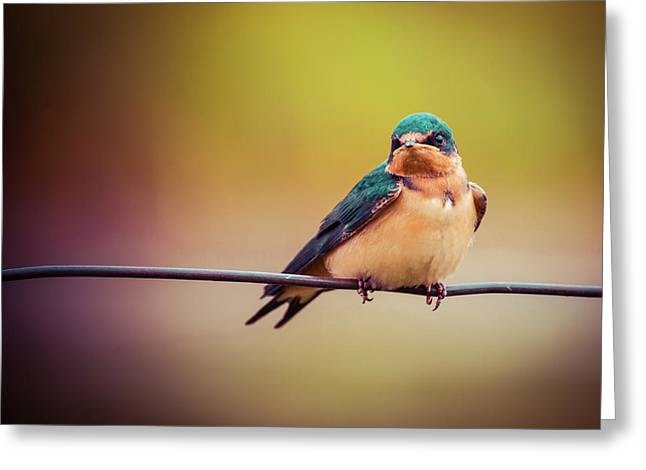 Swallow Greeting Card by Mary Hone
