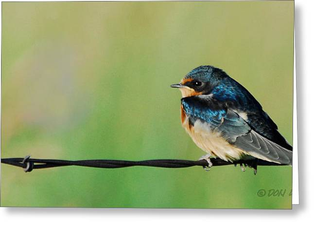 Greeting Card featuring the photograph Swallow On Barbed Wire by Don Durfee
