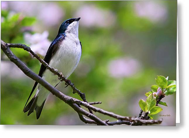 Swallow Song Greeting Card by Christina Rollo