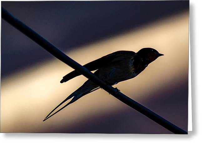 Swallow Speed Greeting Card