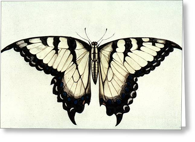 Swallow-tail Butterfly Greeting Card by Granger