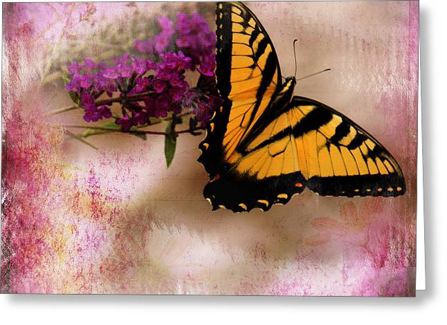 Swallow Tail Full Of Beauty Greeting Card
