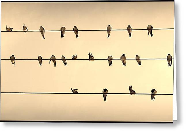 Swallows On Wires Greeting Card