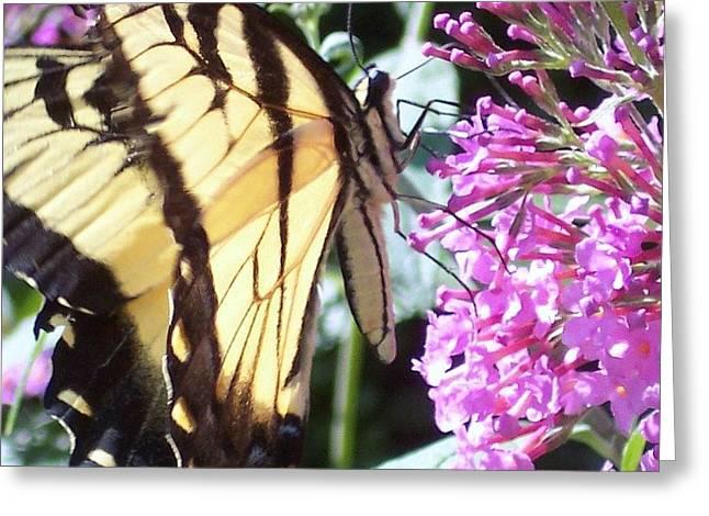 Swallowtail Greeting Card by Anna Villarreal Garbis