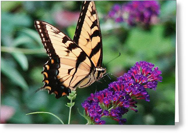 Swallowtail Butterfly 1 Greeting Card by Sue Melvin