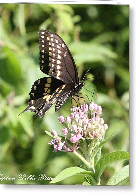 Swallowtail Butterfly 3 Greeting Card