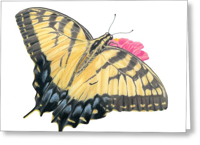 Swallowtail Butterfly And Zinnia- Transparent Backgroud Greeting Card