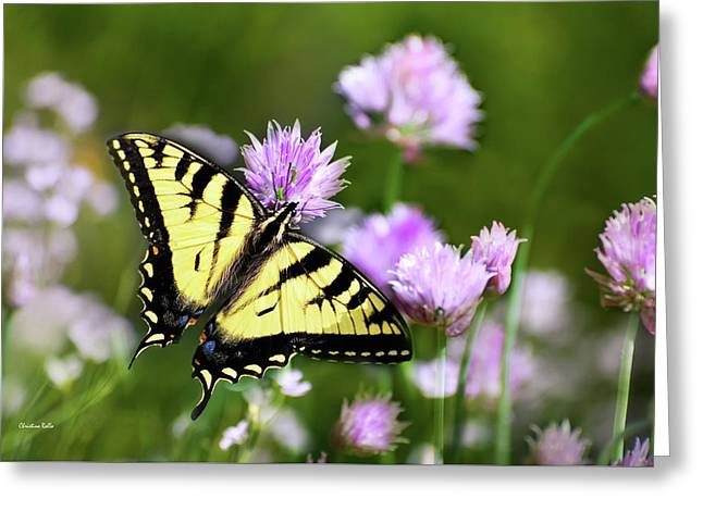 Swallowtail Butterfly Dream Greeting Card