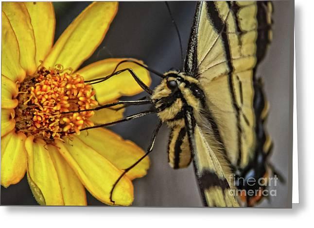 Swallowtail Close Up Greeting Card by Robert Bales