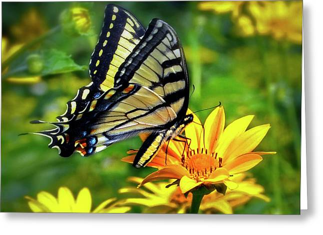 Swallowtail Dance Greeting Card by Diane E Berry
