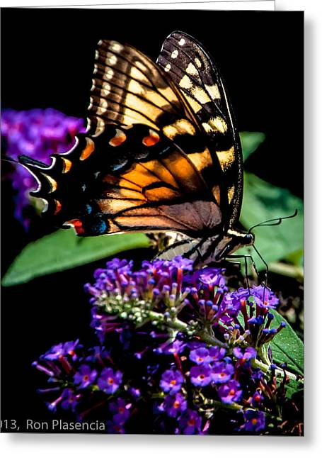 Swallowtail Feasting Greeting Card by Ron Plasencia