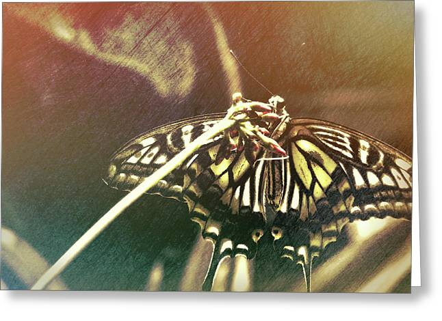 Swallowtail Greeting Card by JAMART Photography
