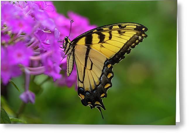 Swallowtail  Greeting Card by Jeff Klingler