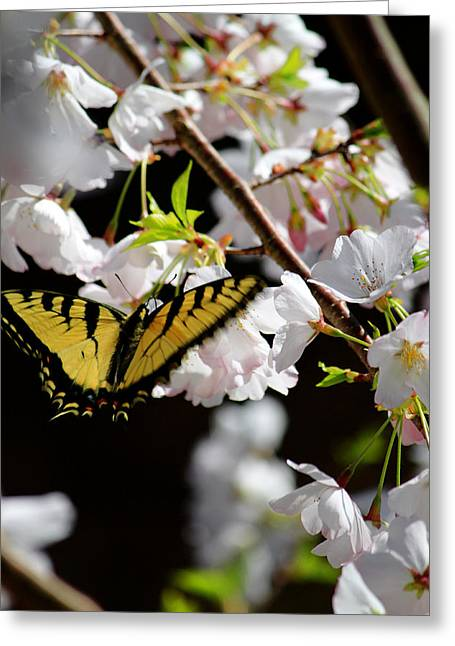 Swallowtail Greeting Card by Nathan Grisham