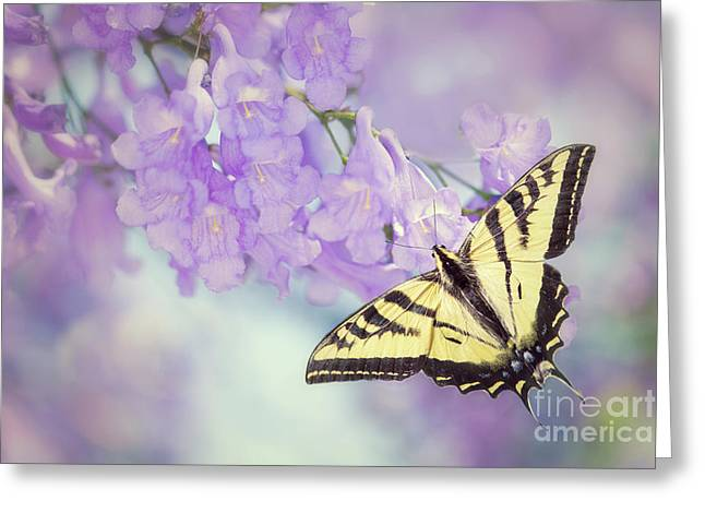Swallowtail On Purple Flowers Greeting Card