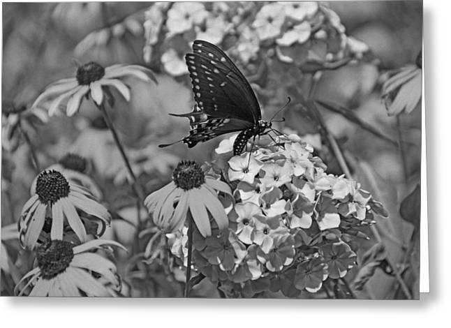 Swallowtail  Greeting Card by Sandy Keeton