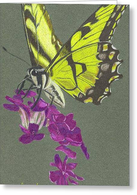 Swallowtail With Phlox Greeting Card