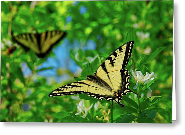 Swallowtails Greeting Card