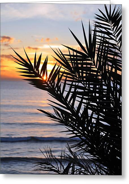 Swamis Palm Greeting Card by Kelly Wade