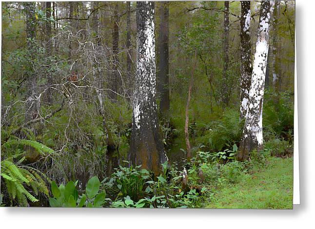 Swamp And Cypress Greeting Card