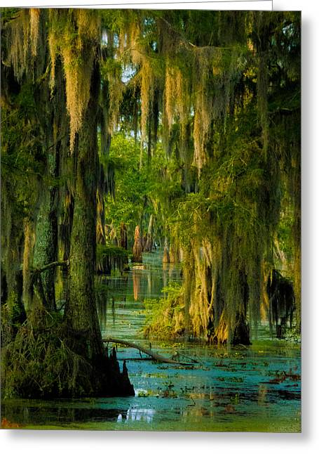 Swamp Curtains In May Greeting Card