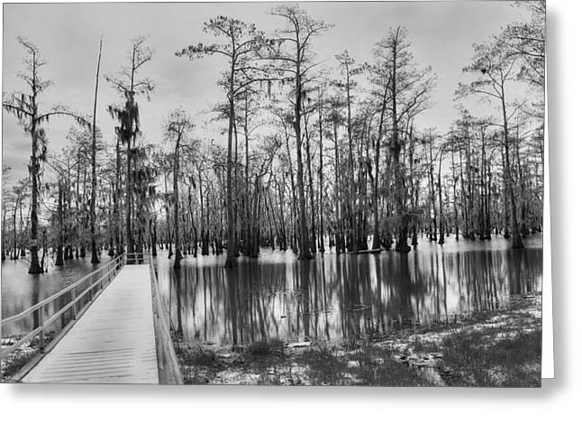 Swamp Dock Black And White Greeting Card