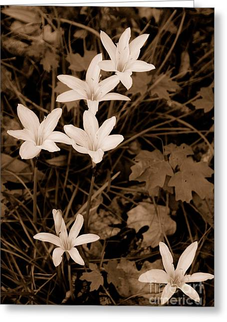 Swamp Lily Greeting Card