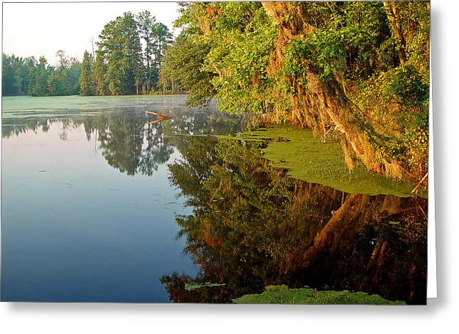 Swamp Pond Greeting Card by Michael Whitaker