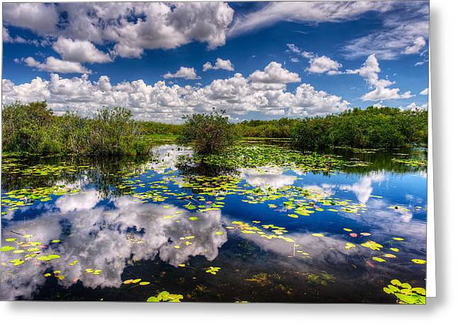 Reflecting Water Greeting Cards - Swamp Reflections Greeting Card by Riccardo Mantero