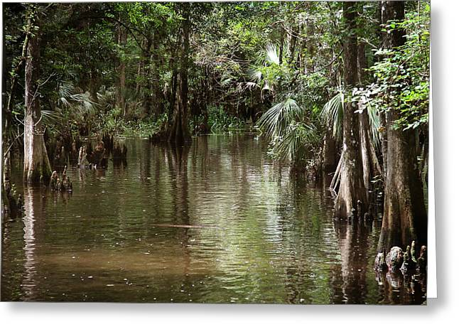 Swamp Road Greeting Card