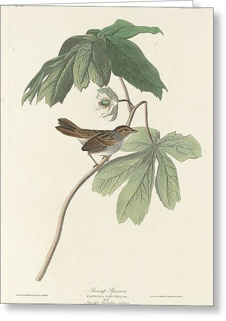 Swamp Sparrow Greeting Card by Dreyer Wildlife Print Collections