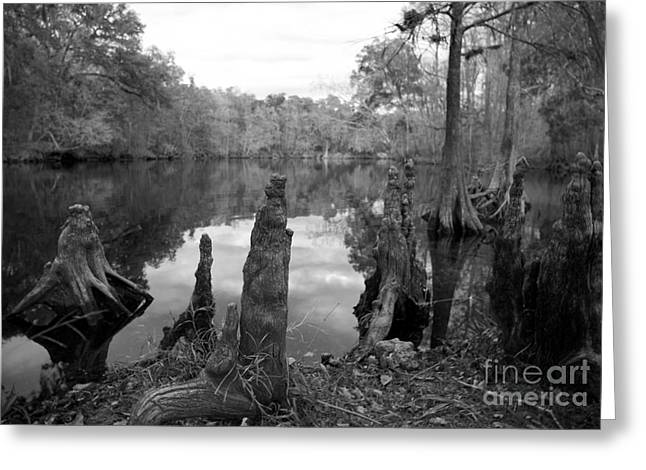 Swamp Stump II Greeting Card by Blake Yeager